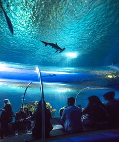 """The Blue Planet"" the new National Aquarium, near Copenhagen."