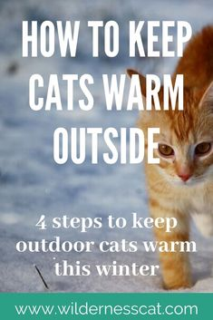 You can keep cats warm through the winter—even if they never come inside the house. Let's dive into the four steps you can take to keep outdoor cats warm. Feral Cat Shelter, Outdoor Cat Shelter, Outdoor Cats, Feral Cats, Cat Shelters For Winter, Dog Igloo, Dog Feeding Station, Cat Health, Kitty