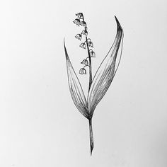 More lily of the valley #flowertattoos #illustration #tattoos #miamitattoos…