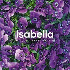Branding. Isabella  http://cargocollective.com/aleksfigueira/Isabella