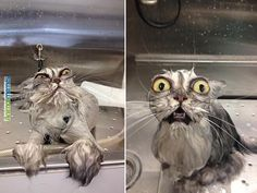 Cat memes It looks worse in reality...