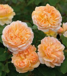 62 62 62 Beste Gardening Sage images on Pinterest in 2018   Frases   50059c