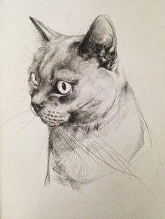 Kocia Gwiazda Rysunek format A3 Cat Star