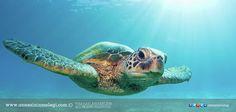 Eğlenceli Gerçekler: Kaplumbağalar dişlerini fırçalamaz