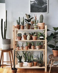 Home Decoration Living Room Room With Plants, House Plants Decor, Easy House Plants, Plant Aesthetic, Aesthetic Room Decor, Ikea Plants, Indoor Plants, Deco Cactus, Cactus Pot