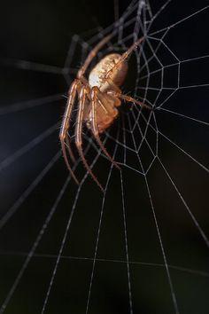 Itsy bitsy spider by Rune K on 500px