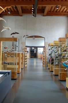 A visit to my favourite museum - Naturalis in Leiden (follow link for blog post with lots more pictures) #NaturalHistory #Naturalis