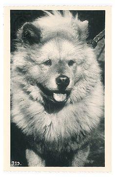 Vintage Postcard ~Chinarose Collection