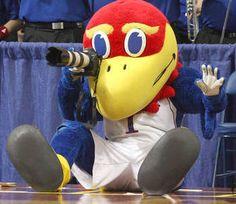 10 Best KU basketball images   Ku basketball, University of