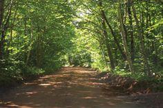 FIGURE 12 : Forêt acadienne près de Strathgartney, dans l'Île-du-Prince-Édouard.