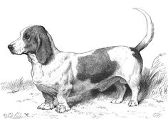 Mr. Everett Millais's Basset Hound Model IIII by Cassell's Book of the Dog | Art Posters & Prints