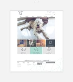Pikipo #interface #design #UI #website #web #pleo