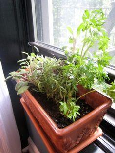 Winter Windowsill Garden – Foods To Grow On A Windowsill In Winter