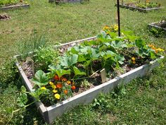 Community Garden: The vision for these gardens is to grow food crops using organic, sustainable methods.