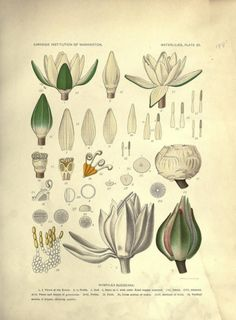 25 Beautiful Botanical Images for Your Walls
