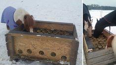 Caroline Eriksson ville inte ge sina hästar hö i nät eller i lådor med galler, med tanke på skaderisken. Lösningen blev en hemmabyggd slowfeeding-låda.
