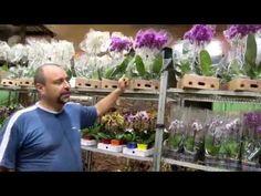 Empresário compartilha a beleza das orquídeas com frequentadores de clube em Alphaville - YouTube