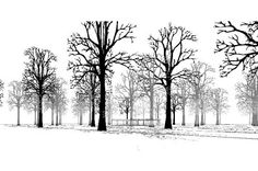 29 Best revit trees images in 2012 | Revit trees, Revit