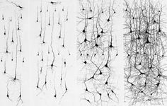 The Cellular Scale: Birthing new neurons at night