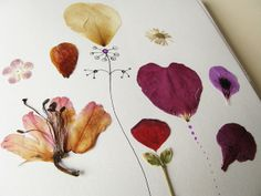 Pressed flowers (pretty things IN books).