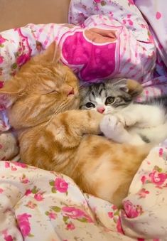 He just got a new little sister - Cutest Baby Animals Cute Funny Animals, Cute Baby Animals, Animals And Pets, Cute Cats, Funny Cats, Beautiful Cats, Animals Beautiful, Kittens Cutest, Cats And Kittens