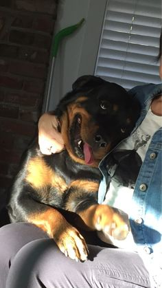 My Rottweiler when Grandma visits.