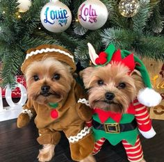 Puppies Ready For Christmas 2021 900 Christmas Cuties Ideas In 2021 Dogs Animals Christmas Animals