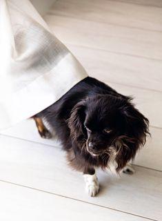 Dogs Hacks Dogs Diy Dogs Room Dogs Pictures Dogs Bed Dogs Collar Dogs Clothes Dogshacks Habitaciones De Perros Casas Para Mascotas Decoracion Para Mascotas