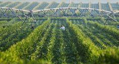 Как от пустиня Небраска се превърна в щат с 92% плодородна земя