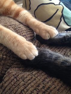 Paws to paws discussion
