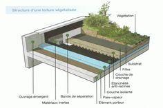 Charpente toit plat mfds constructions charpente couverture de toit pinterest toit plat - Coupe toiture vegetalisee ...