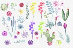 Watercolor flowers and succulents by Spasibenko Art on Creative Market