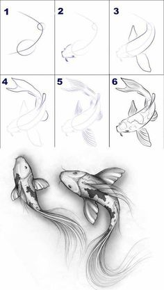 Ideas for home - Tiere zeichnen - Zeichnungen Easy Pencil Drawings, Fish Drawings, Art Drawings Sketches, Cute Drawings, Sketch Art, Koi Fish Drawing, Hand Drawings, How To Sketch, Fish Sketch