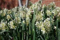 Stunning bulbs are popping up all over the school.