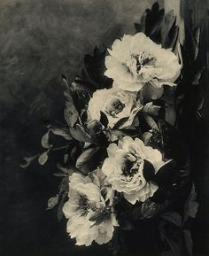 Peonies, (1912) by E Louise Marillier :: The Collection :: Art Gallery NSW
