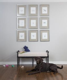 "All it takes is a cushy seat and a considered wall display to make a foyer both striking and welcoming. The Gordons created this grid by hanging $25 sketches commissioned from a local artist in identical frames, spaced three inches apart. ""Each image depicts something meaningful to us, including our two Labs, Maddie [seen here] and Doc,"" says Abby."