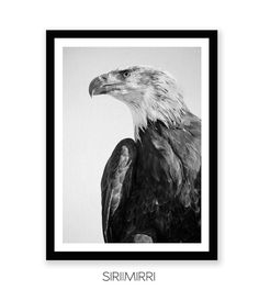 Eagle Print, Hawk Photography, Bird of Prey, Animal Wall Art, Black and White Photo, Printable Art, Instant Download, Modern Minimal, Large  5 INSTANT DOWNLOAD JPEG PRINTABLE FILES INCLUDED WITH YOUR ORDER:  * 4:5 ratio file for printing: Inch: 4x5, 8x10, 11x14, 12x15, 16x20 cm: 10x12 cm, 20x25 cm, 28x35 cm, 30x38 cm, 40x50 cm  * 3:4 ratio file for printing: Inch: 6x8, 9x12, 12x16, 15x20, 18x24 cm: 15x20 cm, 22x30 cm, 30x40 cm, 38x50 cm, 45x60 cm  * 2:3 ratio file for printing: Inch: 4x6…