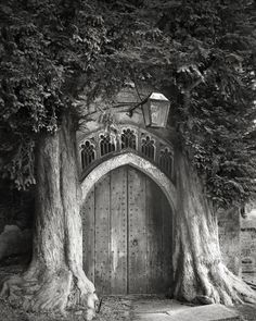 2 Yew trees planted sometime in the century. The Sentinels of St Edwards. Stow-on-the-Wold, England.The Most Ancient and Magnificent Trees From Around the World Old Trees, Beth Moore, Tree Photography, Photography Magazine, Tree Of Life, Belle Photo, San Francisco, Old Things, Around The Worlds
