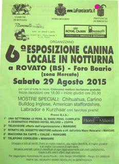 SETTER INGLESE: 6^ Esposizione Canina Locale in Notturna Rovato