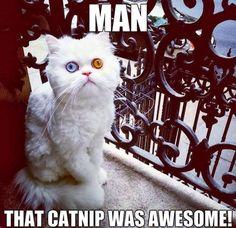 Lustige Tiervideos Katzen