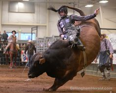 Matt Triplett, of Columbia Falls, MT, gets hit in the helmet by the tail of Predator as he competes in the first Professional Bull Riders Touring Pro Division held at the Northwest Washington Fairgrounds on Friday, April 19, 2013 in Lynden. ANDY BRONSON — THE BELLINGHAM HERALD