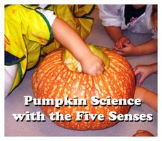 Children become scientific investigators as they explore pumpkins inside and out using all five of their senses. The fun doesn't end there though because the left-over pumpkin seeds and pulp are perfect for cooking and sensory activites galore!