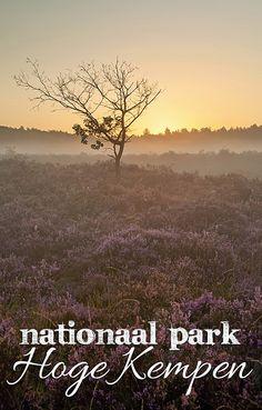Deze route neemt je mee door Nationaal Park Hoge Kempen. De Hoge Kempen werd in 2006 ingesteld en was daarmee het eerste nationale park van België. Het gebied is ongeveer 5750 hectare groot. Je vindt hier vooral naaldbossen en heide, maar ook loofbossen, landduinen, beken en vennen. De Hoge Kempen bestaat uit een aantal (beschermde) natuurgebieden: de Mechelse Heide, de Vallei van de Ziepbeek, het Ven onder de Berg en de Neerharer Heide. De Hoge Kempen ligt op het Kempens Plateau.