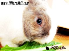 Salad Time! www.tifforabbit.com