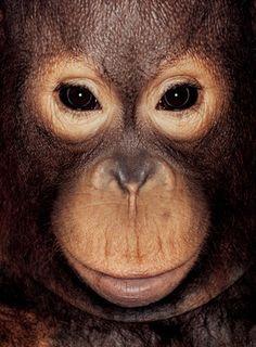 "James Mollison's ""James & Other Apes"" series."