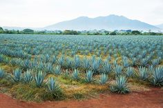 Grand Velas Riviera Nayarit Offers New Exclusive Tequila Tasting Experience
