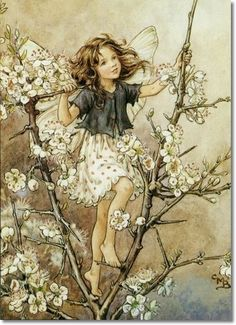 Hawthorn tree fairy, by Cicely Barker.