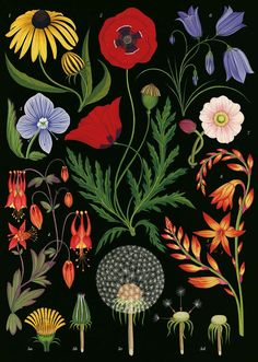 Just released is Botanicum, which celebrates the global plant kingdom via more than 100 of Katie Scott's color illustrations, accompanied with text by Kew's Director of Science Kathy Willis. #illustration