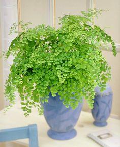 Best Indoor Plants, Indoor Planters, Cool Plants, Outdoor Plants, Indoor Garden, Growing Plants Indoors, Herbs Indoors, Growing Herbs, Gardens