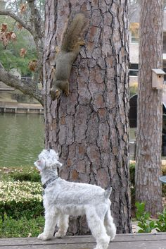 Unlikely friend! Ha! Our squirrels used to tease the hell out of Barkley! I think he enjoyed it though!